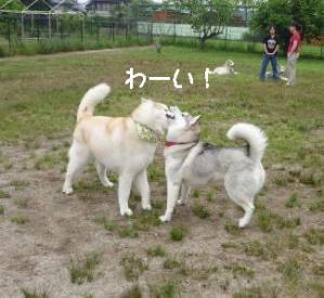 2011 6月愛ハス 056a