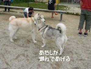 2011 6月愛ハス 053a