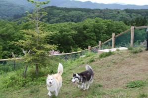2011 6月ひるがの高原 011