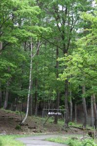 2011 6月ひるがの高原 059