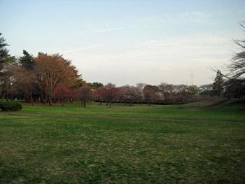 梅がまだ咲いてるよ