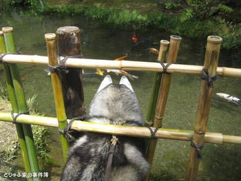 お魚の観察