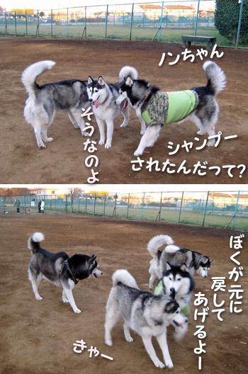 ポトフ&琉くん&ノンちゃん