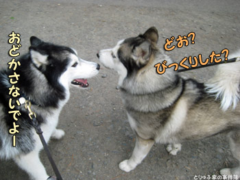 ポトフ&シオンくん