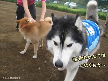 ポトフ&サキちゃん