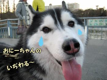 泣きべそポトフ