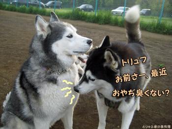 トリュフ&琉くん