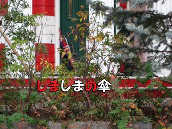 赤白のシマシマ傘