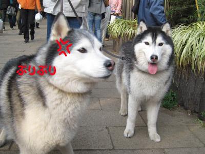トリュフ&ポトフ