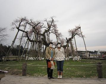 2011.4.30 伊佐沢の久保桜 末っ子と