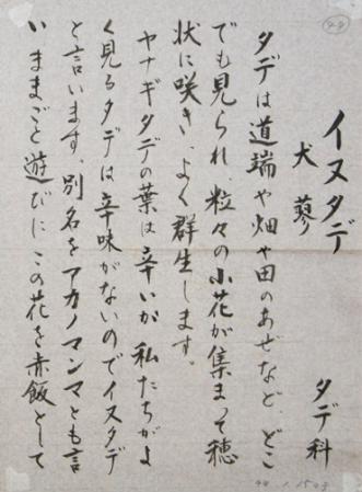 DSC01080 - コピーイヌタデ右