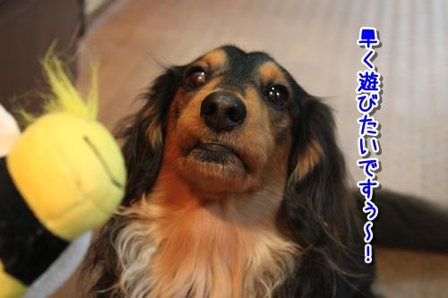 IMG_1414-1.jpg