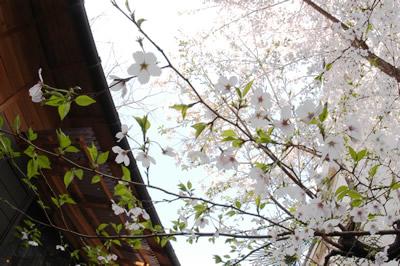 2011_4_11_3.jpg
