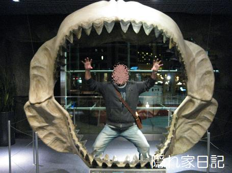ホホジロサメ
