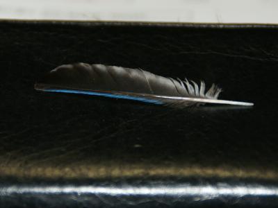 20100804オオルリ