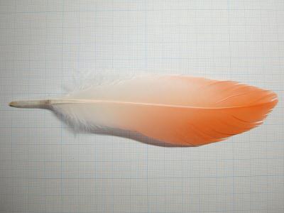 20101025フラミンゴ2