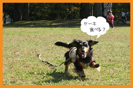 2009 11 08 サプライズパーティー blog03のコピー