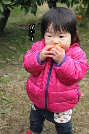 2009 11 22 みかん狩り2 blog09のコピー