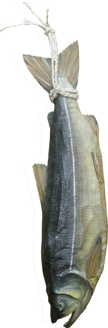 salmonmurakami2010.jpg
