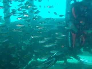 20070916白浜沈船キャビン内