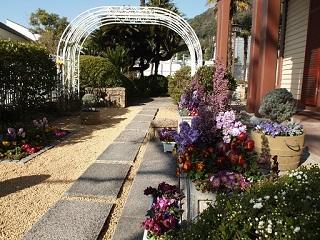 20130320ライン庭の花