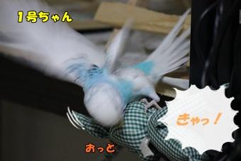 IMG240330-5.jpg