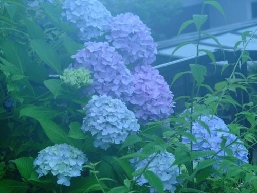 6月の庭top