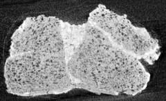 CTスキャンで撮られた米の塊の断面図