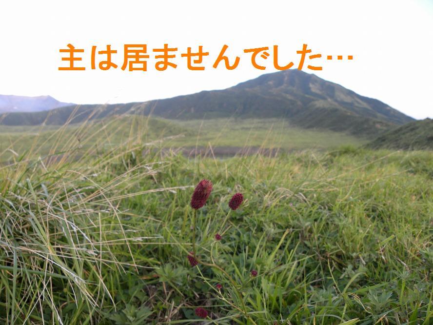 ワレモコウ 2009.09.05