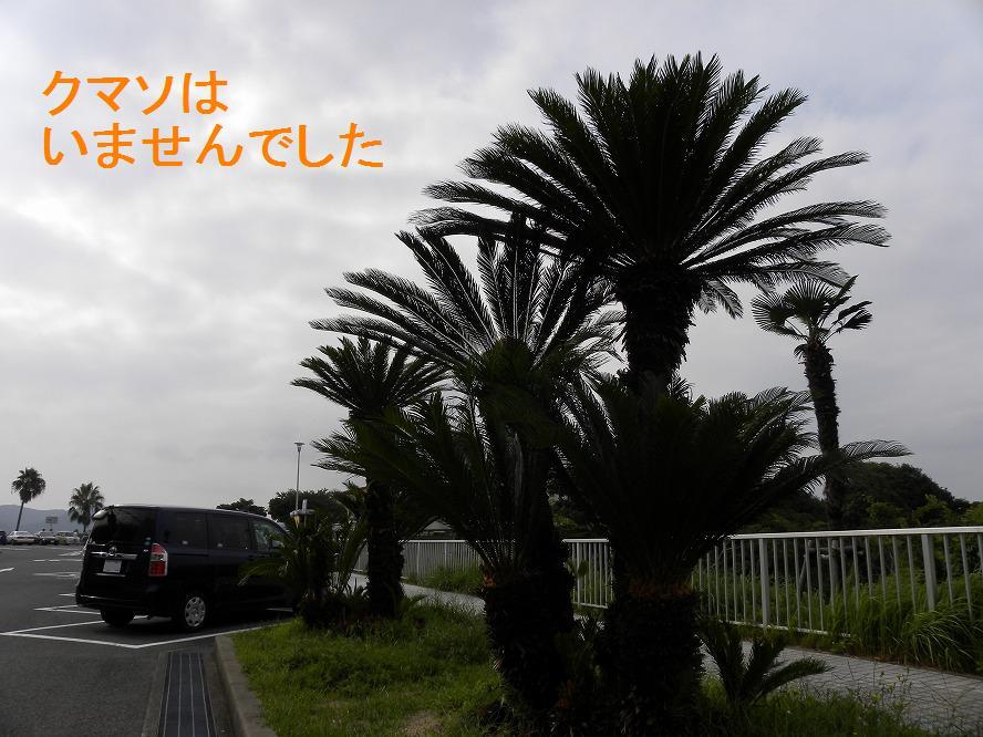 ソテツ 2009.09.05