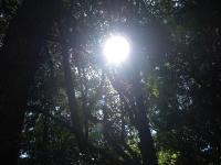 姫神の森と太陽