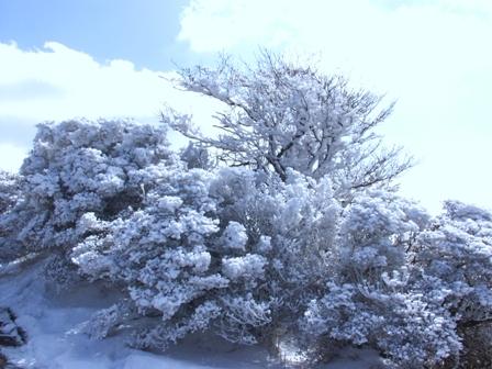 山頂の霧氷1P1011456