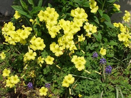 黄色花P1011800