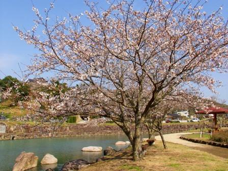 桜2P1011754