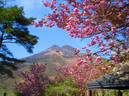 休憩所由布岳と桜CIMG0078