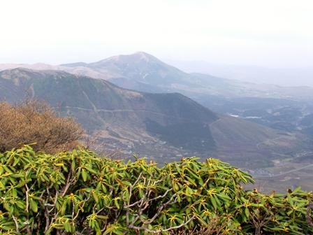 北峰からシャクナゲ越しに湧蓋山P1011963
