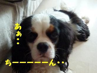 20100312_03.jpg
