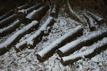 2010.2.1原木と初雪