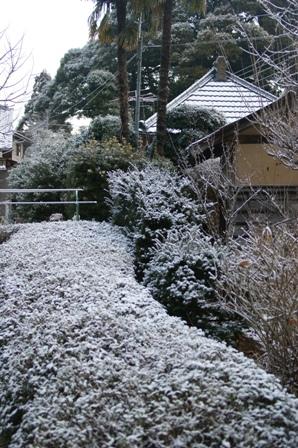 2010.2.1 庭に初雪