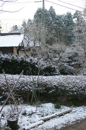 2010.2.1 花壇と初雪