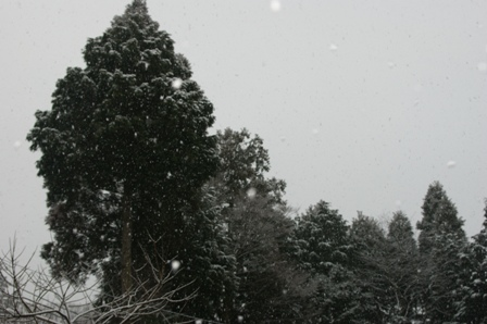 2010.2.18 舞い降りる雪