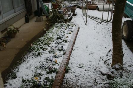 2010.2.18 花壇にも雪