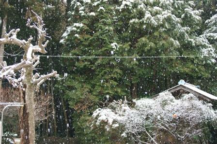 2010.2.18 3回目の雪