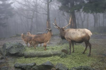2010.2.21 富士の鹿