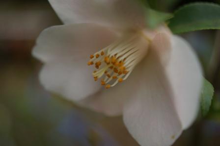 2010.3.15 水仙の花