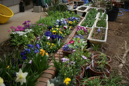 2010.3.15 花壇の花々