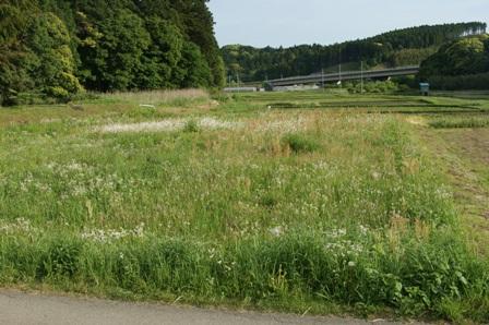 2010.5.19 環境保全型農業の圃場(草生)