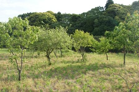 2010.5.19 環境保全型農業の対照圃場 (栗)