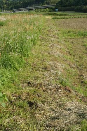 2010.5.19 環境保全型農業の圃場(隣地境界)