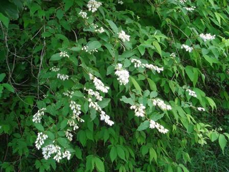 2010.5.28滝の谷津に咲く花